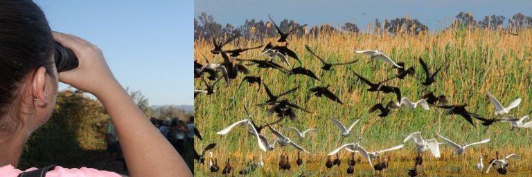BirdWatching – Observación de Aves