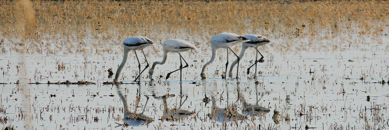 Birding Parque Natural del Montgó-Magic&Nature